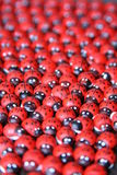 Wooden ladybugs for handicrafts and decoration Stock Photos