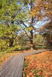 Wooden lane Royalty Free Stock Image