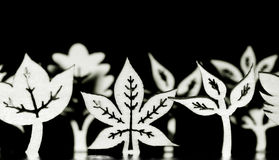 Wooden leaf shapes in black and white Royalty Free Stock Photography