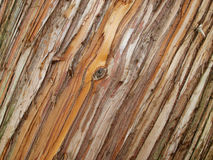 WOODEN LINES BACKGROUND TEXTURE ABSTRACT. TEXTURE FROM A TREE AT SPRING TIME IN PORTUGAL Royalty Free Stock Images