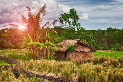 Wooden little cottage in a tropical forest. Day and sunshine Stock Image