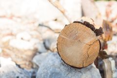 Timber close up beautiful nature wooden log background royalty free stock photography