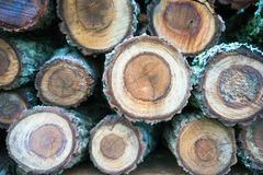 Wooden Log Close Up Stock Images