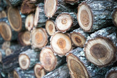 Wooden Log Close Up Stock Photography