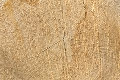 Wooden log cut background texture Stock Photo