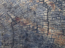 Wooden log texture Royalty Free Stock Images