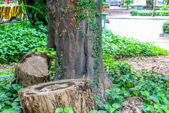 Wooden log and tree and green plant Stock Photos