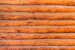 Wooden log wall texture. Stock Image