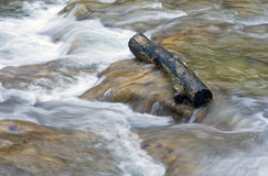 Wooden log in water Royalty Free Stock Images