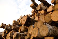 Wooden logs. A view of a large pile of wooden logs stock image