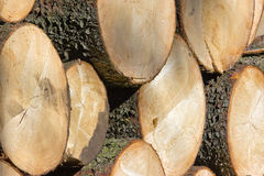 Wooden logs Royalty Free Stock Images