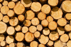 Wooden logs Stock Photography