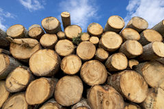 Wooden Logs with Blue Sky on Background Stock Photo