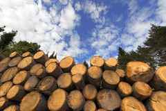 Wooden Logs with Blue Sky on Background Royalty Free Stock Photo