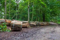 Wooden logs bundled Royalty Free Stock Image