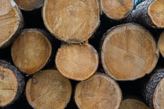 Wooden logs close up Royalty Free Stock Photo