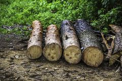 A wooden logs. Close-up of a some wooden logs at the ground Stock Photography