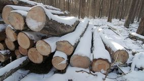 Wooden Logs Covered With Snow on the Ground in the Forest. Sunny day stock video footage