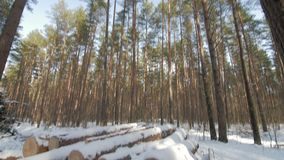 Wooden Logs Covered With Snow on the Ground in the Forest. Vertical panorama stock footage