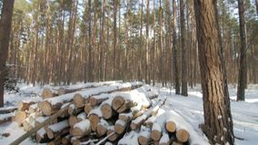 Wooden Logs Covered With Snow on the Ground in the Forest. Vertical panorama., sunny day stock video