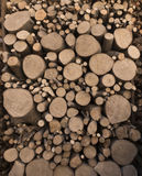 Wooden logs cut. And stacked Stock Image