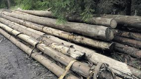 Wooden logs extracted in woods. Carpentry material in mountain landscape. Wooden logs extracted in woods. Narrowed wood, spruce logs, lumber industrial raw stock video footage