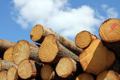 Wooden logs and fair weather sky Stock Photo