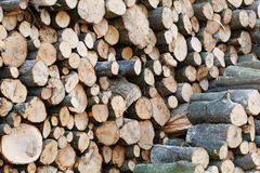 Wooden Logs with Forest on Background. Trunks of trees cut and stacked in the foreground Royalty Free Stock Photography
