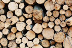 Wooden Logs with Forest on Background. Trunks of trees cut and stacked in the foreground Royalty Free Stock Images