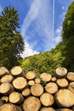 Wooden Logs with Forest on Background Stock Image