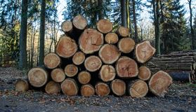 Wooden Logs with Forest on Background. Trunks of trees cut and stacked in the foreground royalty free stock photo