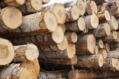 Wooden Logs with Forest on Background Trunks of trees cut and stacked in the foreground, green forest in the background Royalty Free Stock Photos