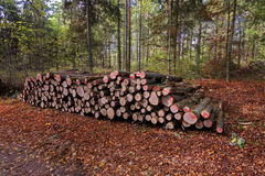 Wooden Logs with Forest on Background Royalty Free Stock Photography