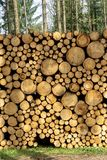 Wooden Logs with Forest on Background. Trunks of trees cut and stacked in the foreground royalty free stock image