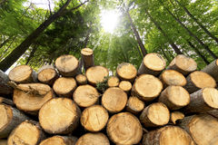 Wooden Logs with Forest on Background Stock Photos