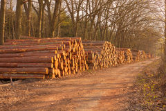 Wooden logs Stock Images