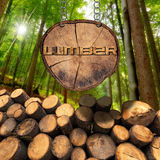 Wooden Logs with Forest and Lumber Sign. Trunks of trees cut and stacked and wooden sign, section of tree trunk with text lumber, hanging with metal chain. A Royalty Free Stock Images