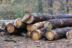 Wooden logs in forest Stock Image
