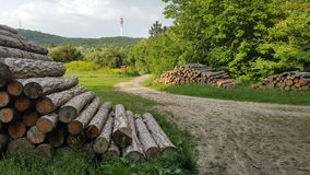 Wooden logs in the forests of Budapest Stock Photos