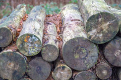Wooden logs in forrest Royalty Free Stock Photos