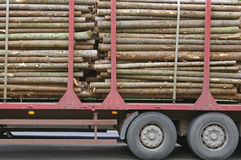 Wooden Logs on Logging Truck Trailer Royalty Free Stock Photo