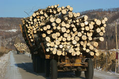 Wooden Logs on Logging Truck Trailer royalty free stock image
