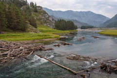 Wooden Logs on Mountain River Flowing along Little Canyon. Summer Landscape: Wooden Logs on Mountain River Flowing along Little Canyon Royalty Free Stock Image