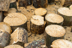 Wooden logs of oak tree Stock Photos