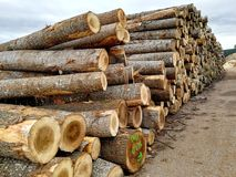 Wooden logs. In a pile royalty free stock image