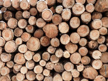 Wooden logs on a pile Royalty Free Stock Images