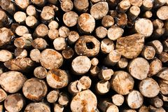 Wooden logs piled up. Texture of wooden logs piled up royalty free stock photos