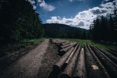 Wooden logs placed on the ground. Wooden logs located next to each other near the road to forrest from low point of view Stock Images