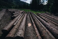Wooden logs placed on the ground. Wooden logs located next to each other near the road to forrest from low point of view royalty free stock image
