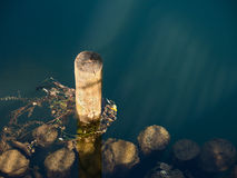 Wooden logs in a river Royalty Free Stock Photo